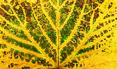 Autumn vine leaf texture Stock Photos
