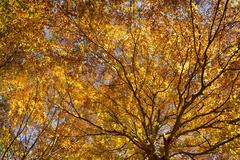 The Trees, autumn season Stock Photos