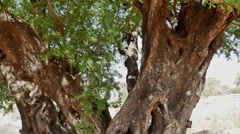 Tree Inside Gimbal FHD Stock Footage