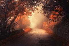 Mystical autumn red forest with road in fog Stock Photos