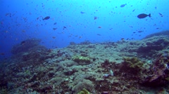 Soft coral reef full of colorful tropical fishes swimming Stock Footage
