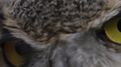 Horned owl macro of eye close up with feathers Stock Footage