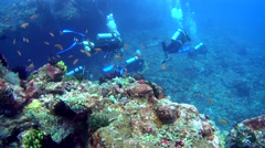 Divers swimming behind big rock full of soft coral and feather stars Stock Footage
