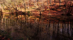 Forest lake in autumn Stock Footage