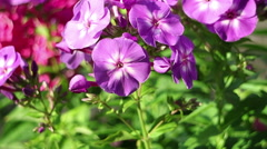 Summer flowers in the garden. Landscape design Stock Footage