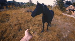 Caress and feed the horse in the evening in summer sunshine in slow motion. Stock Footage