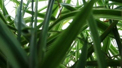 Sedge view from the height of an ant. Stock Footage