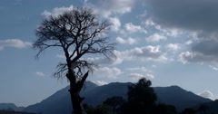 Landscape Time Lapse Dead Tree Stand Alone Big Clouds Stock Footage