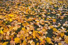 Background made of autumn leaves Stock Photos