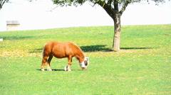 Horse on a farm near Eisingen Stock Footage