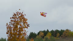 Kite stuck on the branches of an autumn's yellow maples  tree Stock Footage