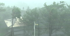 Powerful Hurricane Force Winds Lash Trees Stock Footage