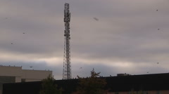 Hawks and vultures flying around cell phone communications tower Stock Footage