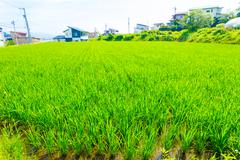 Small Rice Plants Farming Plot Land Japan Houses H Stock Photos