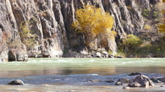 Autumn River Yellow Tree Stream 4K Stock Footage