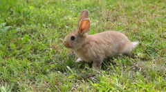 Cute rabbit sitting on the grass Stock Footage