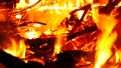 Burning trees in fire flame Stock Footage