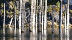 Kaindy Lake Flooded Forest Autumn Yellow 4K Stock Footage