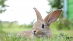 Little bunny rabbit Stock Footage
