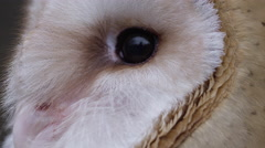Barn Owl Macro extreme close up of eyes Stock Footage