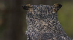 Horned owl close up portrait Stock Footage