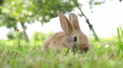 Little rabbit on the grass Stock Footage