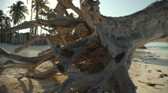 Beautiful dried tree on the ocean shore Stock Footage