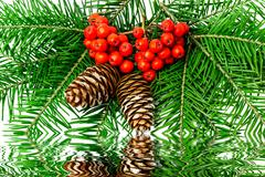 Christmas decoration with rowan on a white background Stock Photos