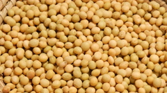 Large mass of soy beans turning Stock Footage