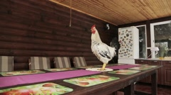 The beautiful motley cock is on the table and crows. Stock Footage