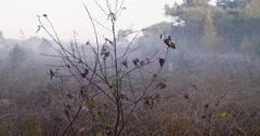 Cobwebs bushes landscape national park Stock Footage