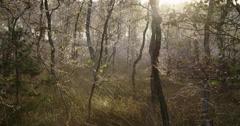 Cobwebs at morning trees national park Stock Footage