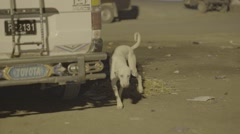 Stray Dog trying to find something to eat Stock Footage