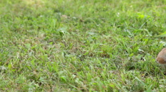 Rabbit on the grass Stock Footage