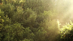 Sunny Rain Light In The Forest Stock Footage