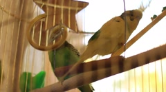 Couple of parrots in the hanging cage Stock Footage
