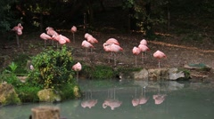 Pink flamingos standing on the shore on the ground in the shade of trees. Stock Footage