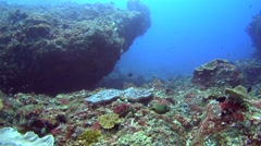 Rocks full of soft corals and cloud of colorful tropical fishes swimming around Stock Footage