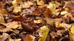 Slider shot of dry autumn leaves on the ground Stock Footage
