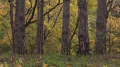 Slider shot of autumn forest scenery Stock Footage