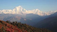 Dhaulagiri Peak Rhododendrons Himalaya Stock Footage