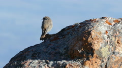 Rock Sparrow Mountains 4K Stock Footage