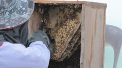 Close-up man harvesting honey from beehives in the wooden box Stock Footage