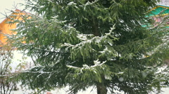 Green fir tree in the snow Stock Footage