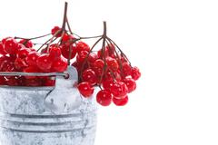 Viburnum in a bucket Stock Photos