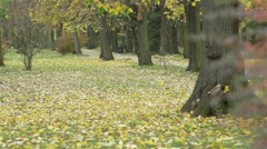 Autumn landscape with yellowing leaves and bush in bright colors Stock Footage