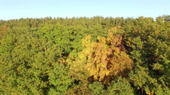Aerial over forest hill in Autumn Stock Footage