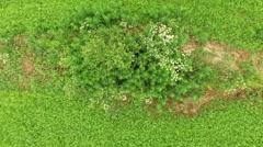 Endless field of green grass Bush in an eye shape form Stock Footage