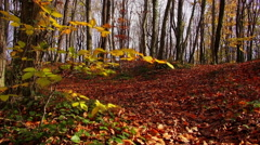 Autumn in the forest Stock Footage