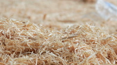 Wooden background: sawdust strewed on the ground at the sawmill. Close-up and Stock Footage